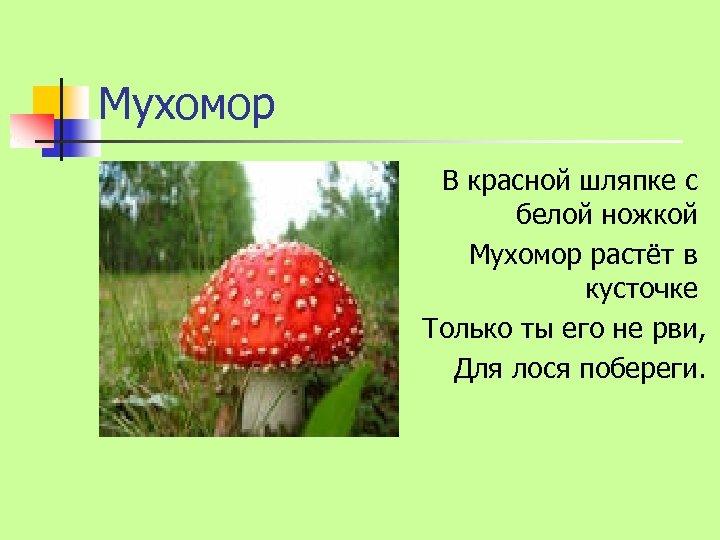 Мухомор В красной шляпке с белой ножкой Мухомор растёт в кусточке Только ты его