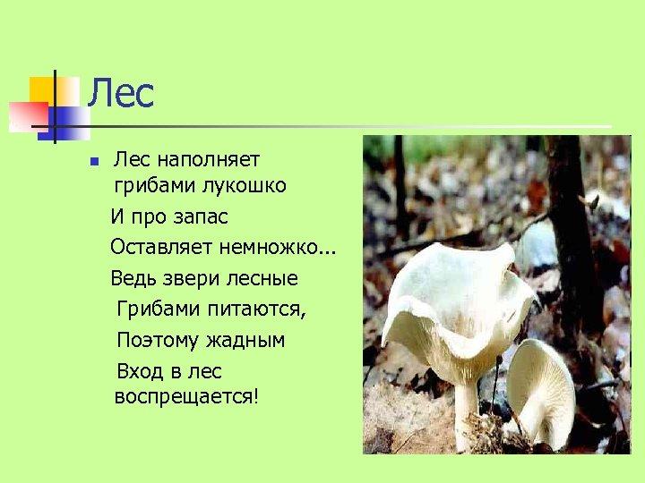 Лес n Лес наполняет грибами лукошко И про запас Оставляет немножко. . . Ведь