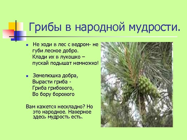 Грибы в народной мудрости. n n Не ходи в лес с ведром- не губи