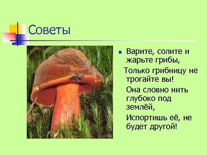 Советы n Варите, солите и жарьте грибы, Только грибницу не трогайте вы! Она словно