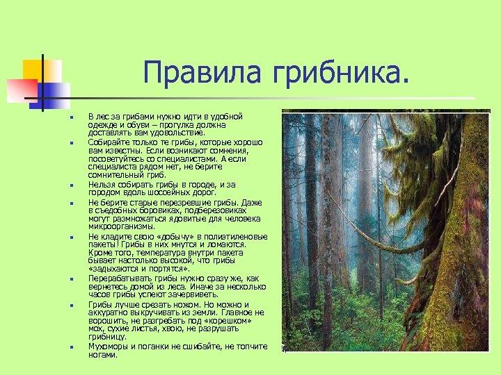 Правила грибника. n n n n В лес за грибами нужно идти в удобной