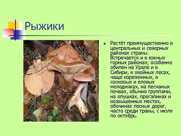 Рыжики n Растёт преимущественно в центральных и северных районах страны. Встречается и в южных