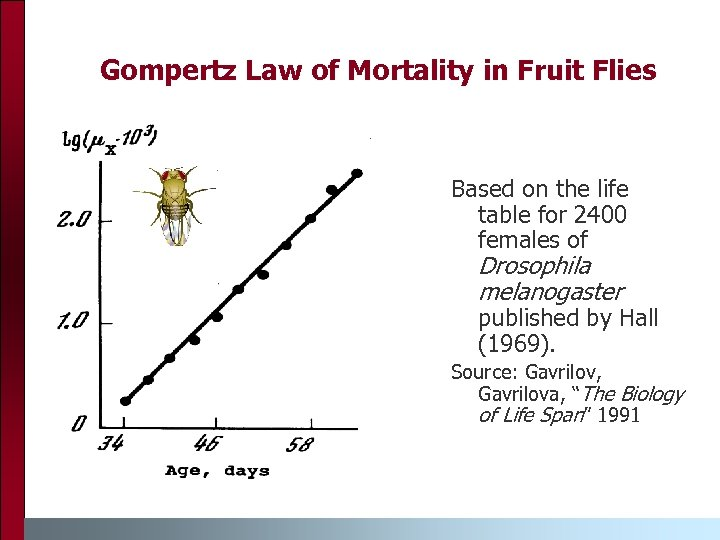 Gompertz Law of Mortality in Fruit Flies Based on the life table for 2400