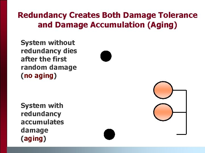 Redundancy Creates Both Damage Tolerance and Damage Accumulation (Aging) System without redundancy dies after