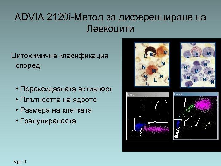 ADVIA 2120 i-Метод за диференциране на Левкоцити Цитохимична класификация според: N N Page 11