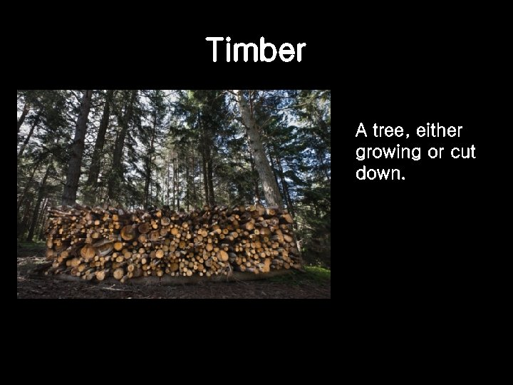 Timber A tree, either growing or cut down.