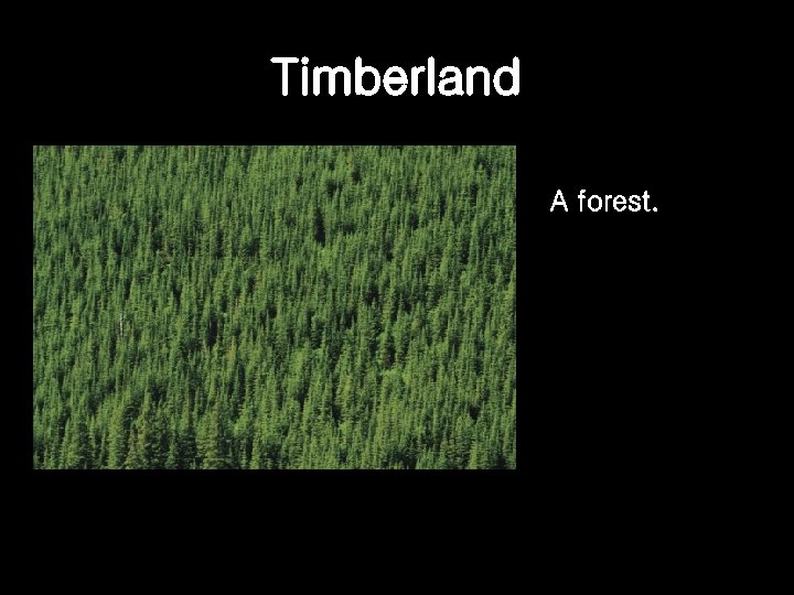 Timberland A forest.