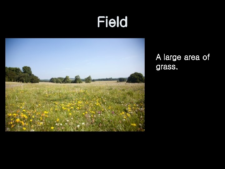 Field A large area of grass.