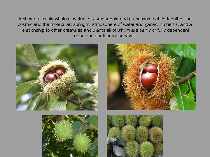 A chestnut exists within a system of components and processes that tie together the