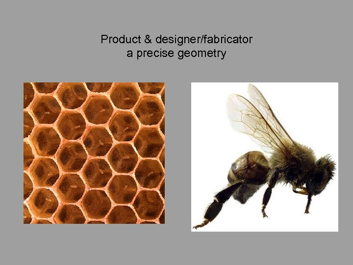 Product & designer/fabricator a precise geometry