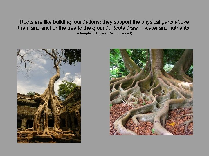Roots are like building foundations: they support the physical parts above them and anchor