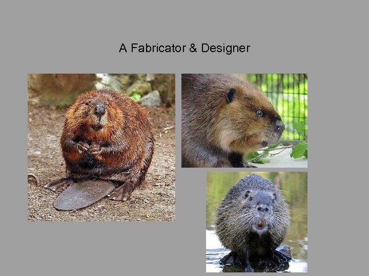 A Fabricator & Designer