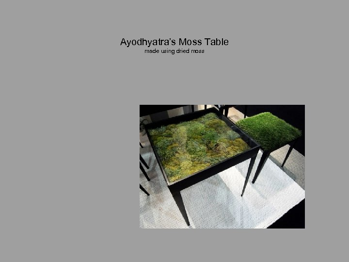 Ayodhyatra's Moss Table made using dried moss