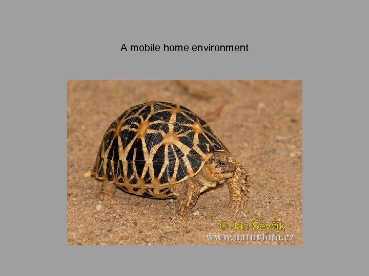 A mobile home environment
