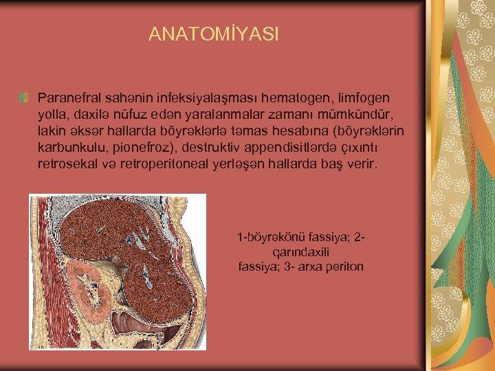 ANATOMİYASI Paranefral sahənin infeksiyalaşması hematogen, limfogen yolla, daxilə nüfuz edən yaralanmalar zamanı mümkündür, lakin