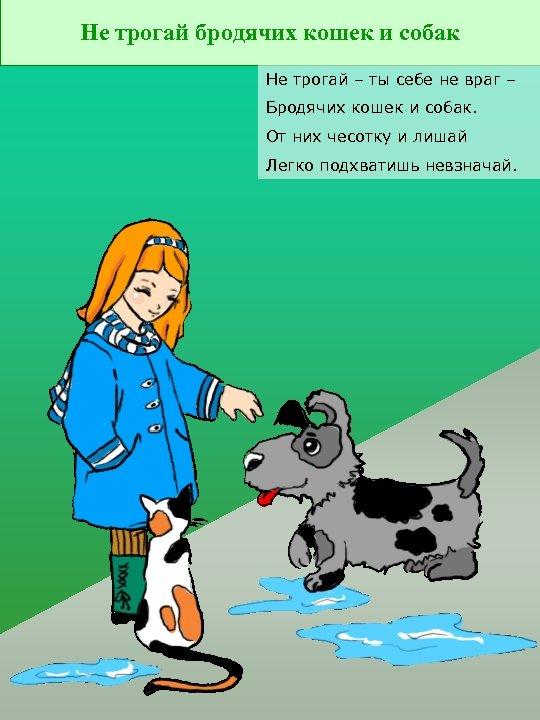 Не трогай бродячих кошек и собак Не трогай – ты себе не враг –