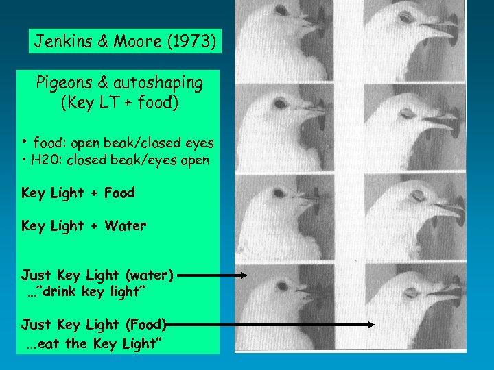 Jenkins & Moore (1973) Pigeons & autoshaping (Key LT + food) • food: open