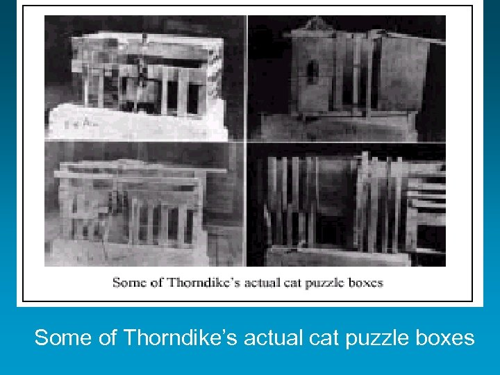 Some of Thorndike's actual cat puzzle boxes