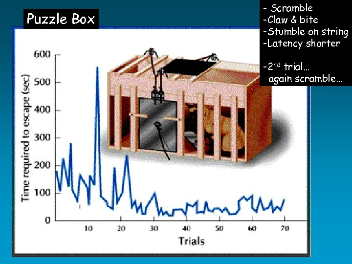 Puzzle Box - Scramble -Claw & bite -Stumble on string -Latency shorter -2 nd