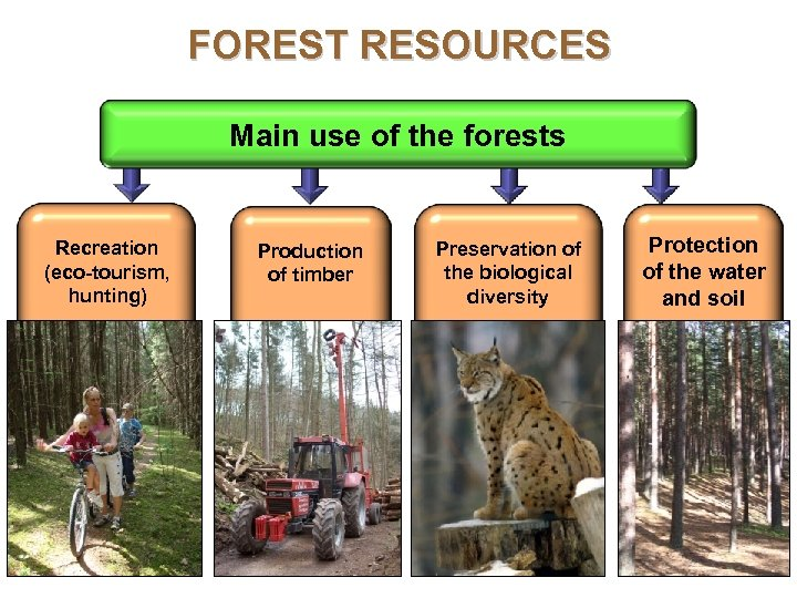 FOREST RESOURCES Main use of the forests Recreation (eco-tourism, hunting) Production of timber Preservation