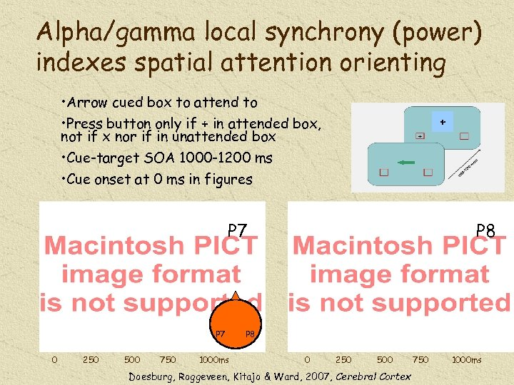 Alpha/gamma local synchrony (power) indexes spatial attention orienting • Arrow cued box to attend