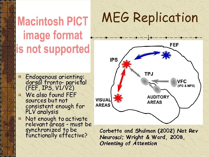 MEG Replication Endogenous orienting: dorsal fronto- parietal (FEF, IPS, V 1/V 2) We also