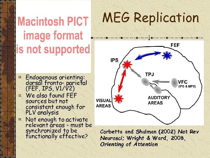 MEG Replication Endogenous orienting: dorsal fronto- parietal (FEF, IPS, V 1/V 2) We also
