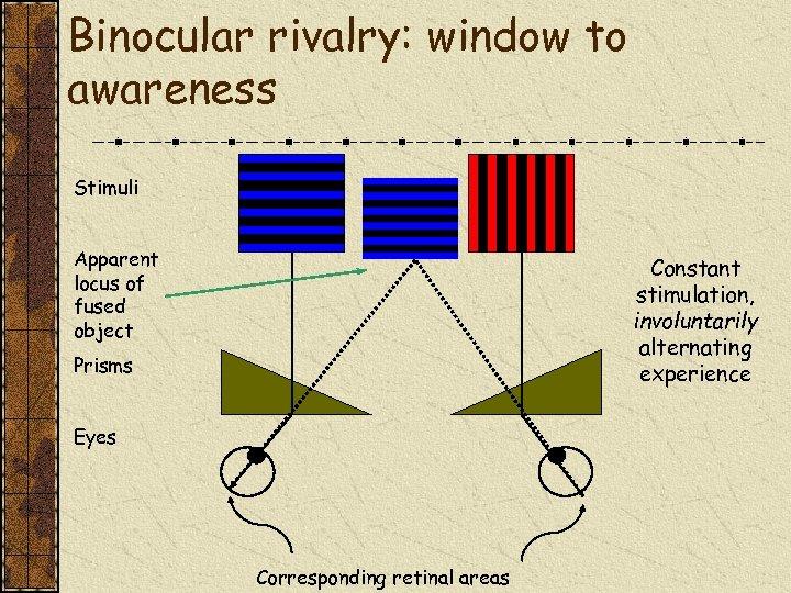 Binocular rivalry: window to awareness Stimuli Apparent locus of fused object Constant stimulation, involuntarily