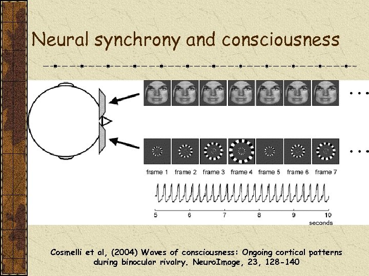 Neural synchrony and consciousness Cosmelli et al, (2004) Waves of consciousness: Ongoing cortical patterns