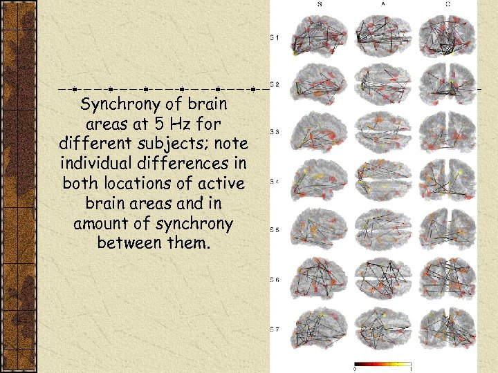 Synchrony of brain areas at 5 Hz for different subjects; note individual differences in