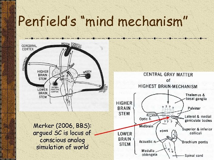 "Penfield's ""mind mechanism"" Merker (2006, BBS): argued SC is locus of conscious analog simulation"