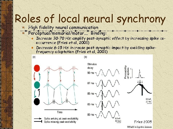 Roles of local neural synchrony High fidelity neural communication Perceptual/memorial/motor…. Binding: Increase 30 -70