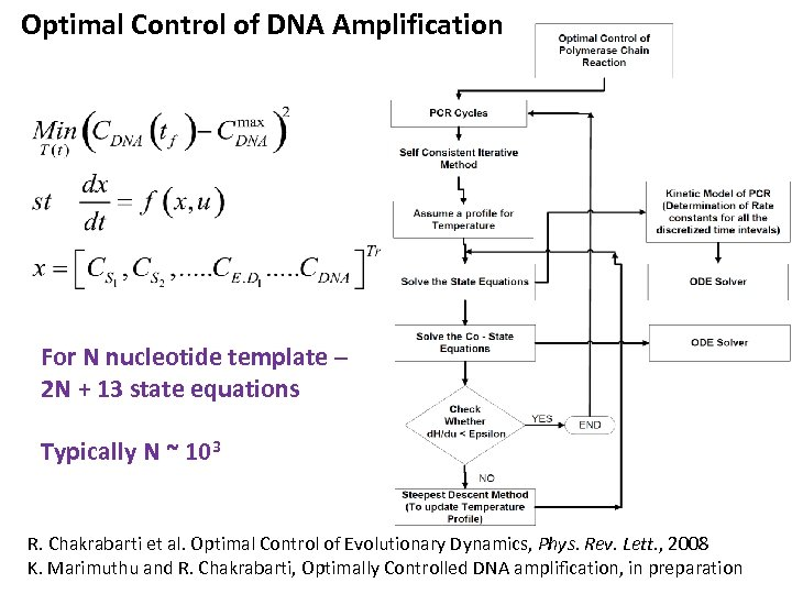 Optimal Control of DNA Amplification For N nucleotide template – 2 N + 13