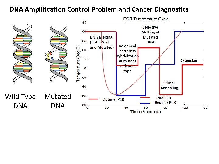 DNA Amplification Control Problem and Cancer Diagnostics Wild Type Mutated DNA