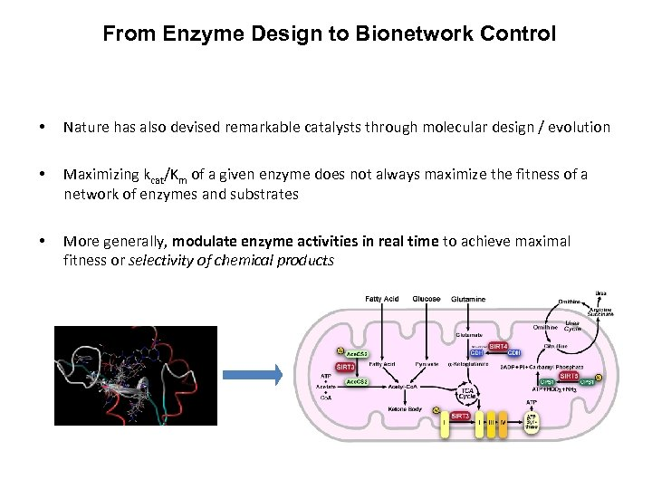 From Enzyme Design to Bionetwork Control • Nature has also devised remarkable catalysts through