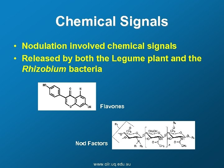 Chemical Signals • Nodulation involved chemical signals • Released by both the Legume plant