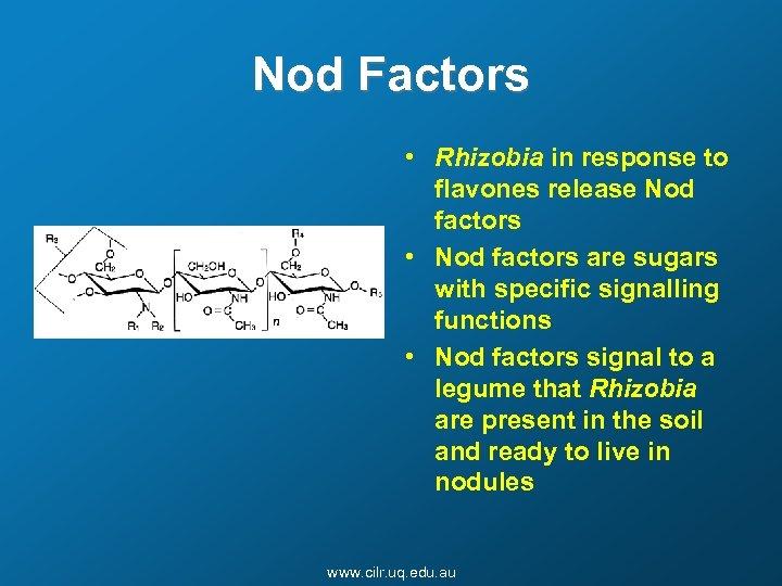 Nod Factors • Rhizobia in response to flavones release Nod factors • Nod factors