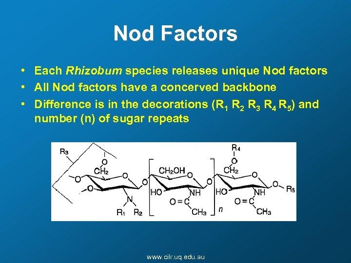 Nod Factors • Each Rhizobum species releases unique Nod factors • All Nod factors