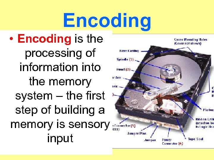 Encoding • Encoding is the processing of information into the memory system – the