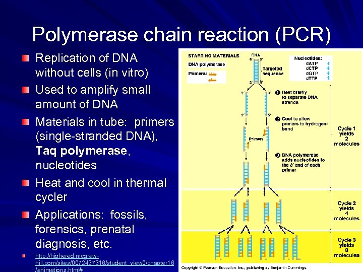 Polymerase chain reaction (PCR) Replication of DNA without cells (in vitro) Used to amplify