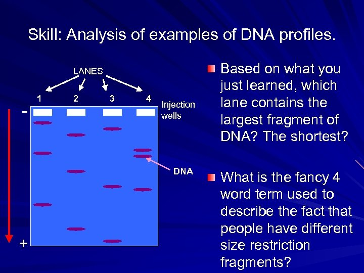 Skill: Analysis of examples of DNA profiles. LANES - 1 2 3 4 Injection