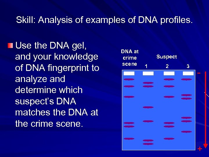 Skill: Analysis of examples of DNA profiles. Use the DNA gel, and your knowledge