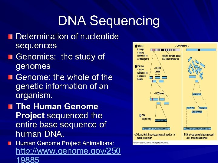 DNA Sequencing Determination of nucleotide sequences Genomics: the study of genomes Genome: the whole