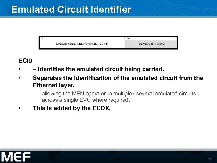Emulated Circuit Identifier ECID • – identifies the emulated circuit being carried. • Separates