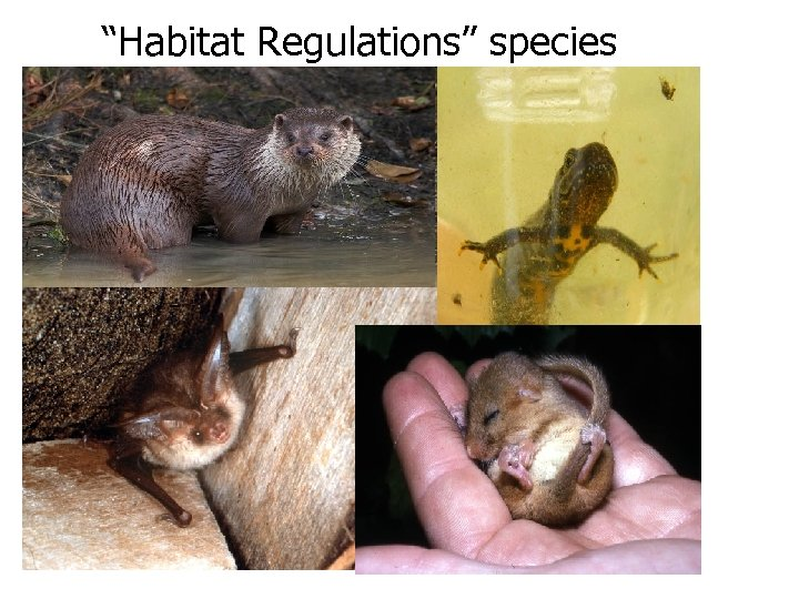 """Habitat Regulations"" species"