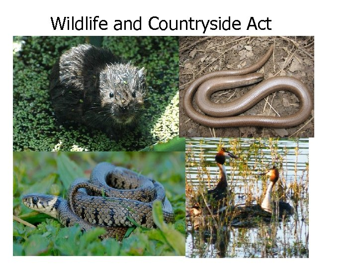 Wildlife and Countryside Act