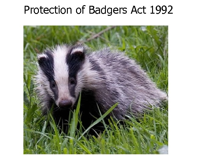 Protection of Badgers Act 1992