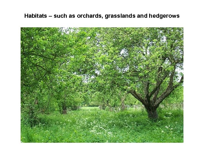 Habitats – such as orchards, grasslands and hedgerows