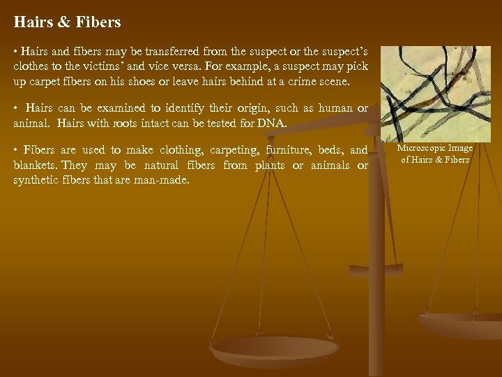 Hairs & Fibers • Hairs and fibers may be transferred from the suspect or