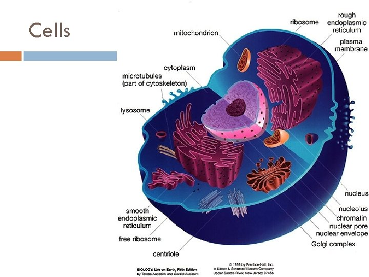 an analysis of cells structure on animals Cells constitute discrete units of biological function and serve as starting points in a myriad of studies to identify and map many of the basic biochemical and physical processes of life.